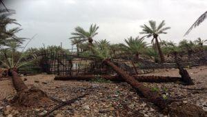 اعصار تشابالا يرحل عن جزيرة سقطرة مخلفاً وراءه كوارث مروعة (صور)