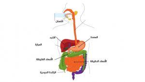 هل تعاني من التهاب الزائدة الدودية؟