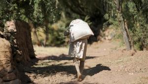 العسل اليمني يعاني صعوبات كثيرة جراء تواصل الحرب