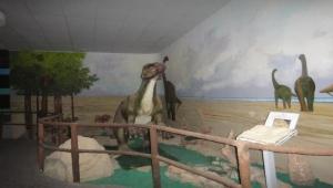 المتحف العلمي يكشف الكنوز الجيولوجية الفريدة وثروات اليمن