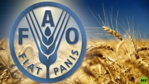فاو: أسعار الغذاء العالمية ترتفع لأول مرة في 2020