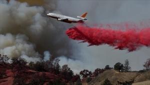 """""""الصيف الأسود"""".. حرائق وكوارث هددت الحياة البرية في 2020 (إطار)"""