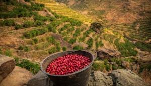 """""""أمل اليمن"""".. حملة دولية لخبراء صناعة القهوة يسلطون الضوء على البن اليمني (ترجمة خاصة)"""