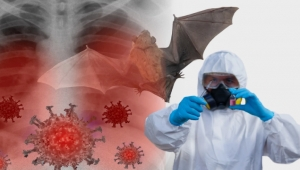 علماء صينيون ينشرون التسلسل الجيني لـ 8 فيروسات كورونا جديدة من الخفافيش بمنجم مهجور