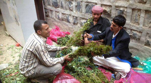 إب.. مقتل خمسة أشخاص من أسرة واحدة بسبب نبتة