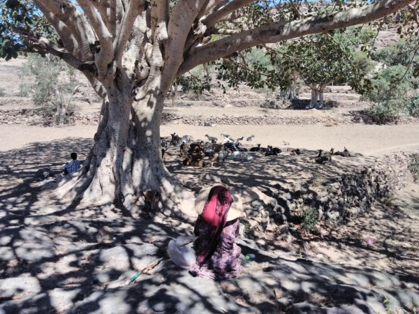 'I only knew about weddings': Destitute Yemenis sell their daughters to pay their debts
