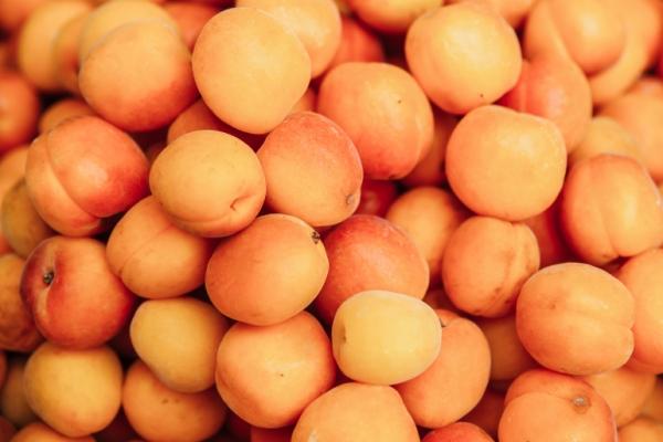 منها تسهيل حركة الأمعاء.. 6 فوائد لفاكهة المشمش