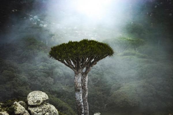 تقرير أممي: سقطرى أعجوبة الطبيعة وجمالها معزولة ومحاصرة بالفقر ومعالمها معرضة للاندثار
