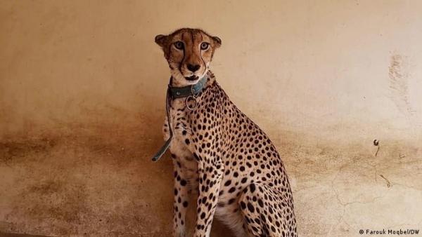 حيوانات مهددة بالانقراض ضحية الحرب والإهمال وعدوانية الإنسان