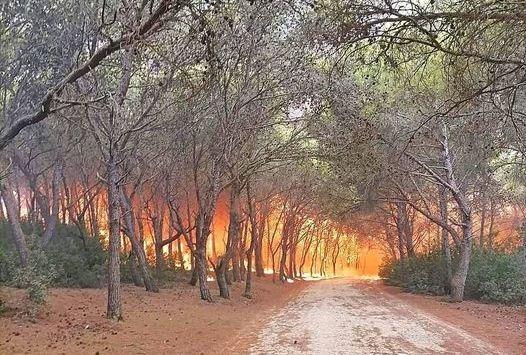 65 قتيلا بينهم 28 عسكريا.. حصيلة ضحايا حرائق الغابات في الجزائر