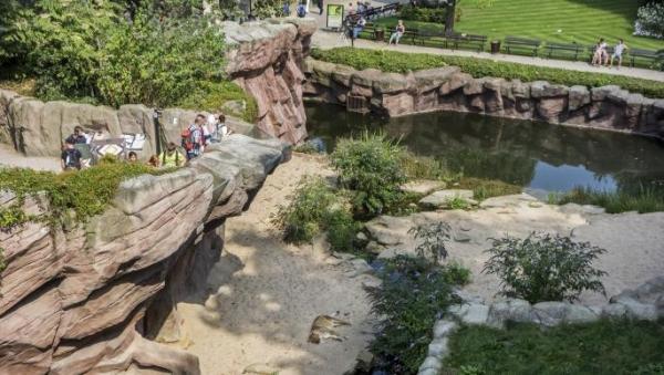 """حديقة حيوان تمنع زائرة من رؤية شمبانزي """"بينها وبينه علاقة عاطفية"""""""