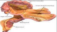 علماء يكتشفون عضواً جديداً في جسم الإنسان
