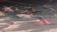 العثور على جثة متحللة دفنت على جانب إحدى الطرقات بخور مكسر بعدن