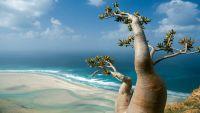 اليونيسكو تتبنى انشاء مشتلين للأشجار النادرة في سقطرى