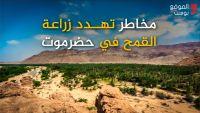 انقطاع الديزل يهدد زراعة القمح في وادي حضرموت (فيديو خاص)