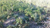 ثلوج تهطل على الضالع وموجة برد تتلف عشرات المحاصيل الزراعية