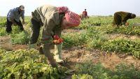 429 طنا خلال ثلاث سنوات .. صنعاء سوق مفتوح لتهريب المبيدات الممنوعة برعاية حوثية (تقرير)