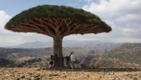 Socotra island: The Unesco-protected 'Jewel of Arabia' vanishing amid Yemen's civil war