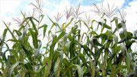 شح الوقود وضعف السيولة يهددان الزراعة في السودان