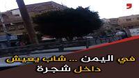 يمني يعيش في شجرة .. تعرف على قصته (فيديو خاص)
