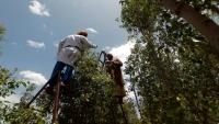 أسمدة ومبيدات زراعية تهدّد حياة اليمنيين