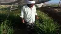 بتجارب ذاتية.. مزارع ينجح في زراعة الأرز لأول مرة في حضرموت (تقرير خاص)