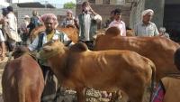 عيد صنعاء.. الدجاج عوضًا عن الأضاحي والفرح معدوم (تقرير)