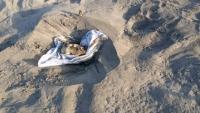العثور على جثة مجهولة الهوية في عدن