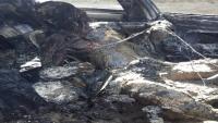 مقتل شخص برصاص مجهولين وإحراق جثته داخل سيارته بعدن (صور)