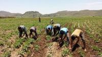 جماعة الحوثي تقدر خسائر الزراعة في مناطق سيطرتها بـ20 مليار دولار