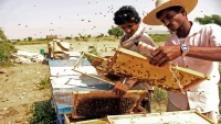 Tough Times For Yemen Honey Trade As War Drags On