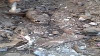 العثور على جثة طفل مطمورة بمخلفات السيول في عدن