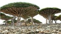 الحكومة اليمنية تدعو اليونسكو لإدانة الأعمال التخريبية للانتقالي في سقطرى