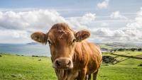 دماء الأبقار والفئران لعلاج كورونا.. وأطباء يشككون في عقار الديكساميثازون