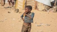 """""""الهجرة الدولية"""" تقدم مساعدات غذائية لـ263 طفلاً نازحاً في مأرب"""
