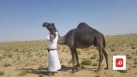 رحلة إلى الصحراء.. تكشف تفاصيل عن الشيخ علي سالم الحريزي في المهرة