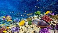 خبير بحري يمني: تسرب خزان صافر قد يتلف التنوع البيولوجي في البحر الأحمر