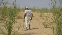 الأمم المتحدة: 50 بالمئة من سكان اليمن سيعانون من الجوع خلال 2021